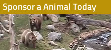 adopt an animal image