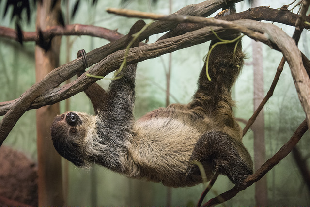 Backstage: Sloths