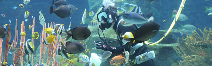 Tropical Reef Dive Show