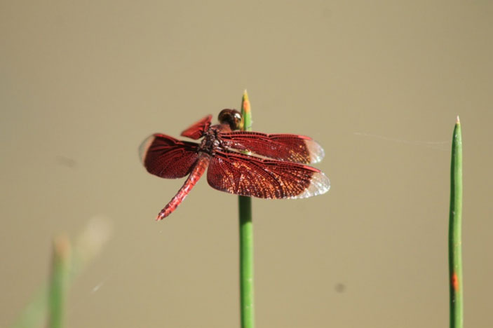 Zoo Camp for Adults: Dazzling Dragonflies