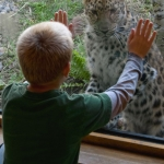 A child connects with an Amur leopard inside the Russia's Grizzly Coast Conservation Cabin.